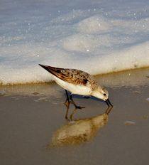 Beach Bird by Billy Bartholomew