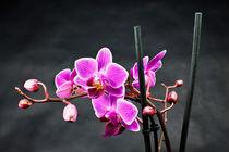 Orchidee von Rico Ködder