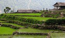 Nepal076