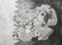 Big Cats of Africa by Melissa Nowacki