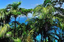 Tropische Palmen von Jürgen Feuerer