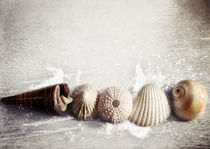 Sea Shells by the Sea Shore von Sybille Sterk