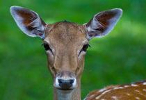 Bambi by bieberchen