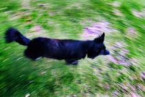 Running Around The World von Larisa Kroshkin