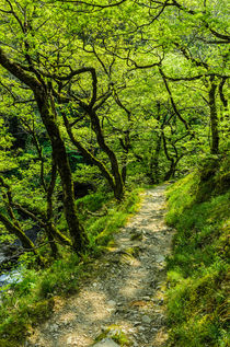 Woodland Path by Craig Joiner