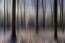 Winter Beech Woods von David Tinsley