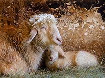 Easter lamb von Leopold Brix