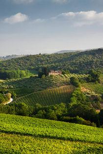 Tuscan Vineyards by David Tinsley