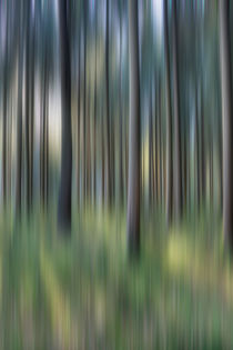 Abstract Spruce Woods by David Tinsley