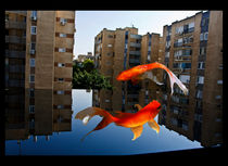 The Tango Of Fishes von Larisa Kroshkin