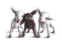 Freche Schafe - Cheeky Sheep by Stefan Kahlhammer