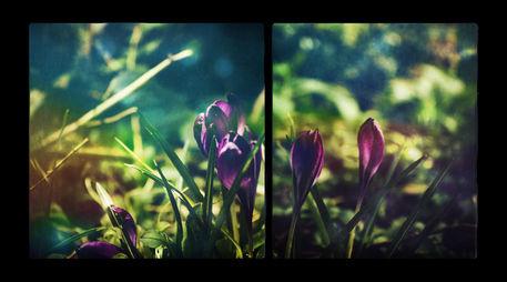 Springmagic-c-sybillesterk