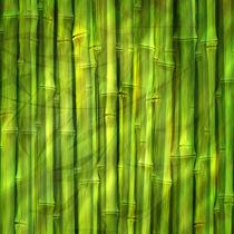 Bamboo Dream by Lutz Baar