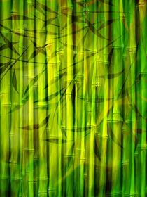 Bamboo Spirit by Lutz Baar