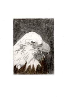 Noble Bald Eagle by Melissa Nowacki