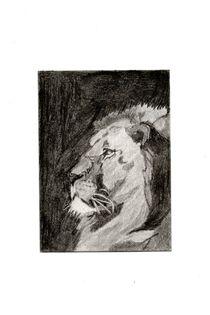 Stoic-lion-2