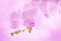 orchids on light background. Toned image. by Serhii Zhukovskyi