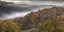 Misty Autumn Morning by David Tinsley