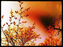 Zaubernussfarbsymbiose~orange von edelart