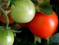 Tomatoes .. von bebra