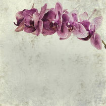 textured old paper background with magenta phalaenopsis orchid by Serhii Zhukovskyi