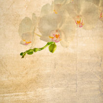 textured old paper background with white and magenta phalaenopsis orchid by Serhii Zhukovskyi