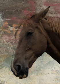 Horse by Nigel  Bangert