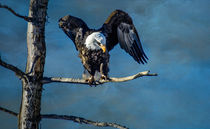 Bald Eagle by Barbara Magnuson & Larry Kimball