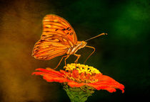 Butterfly on Zinnia by Barbara Magnuson & Larry Kimball