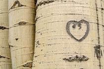 Hearts by Barbara Magnuson & Larry Kimball