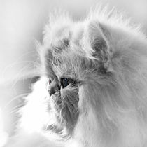 Her Ladyship Kitty by Larisa Kroshkin