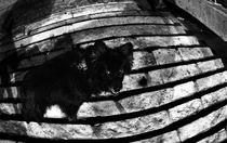 Whether a Night Dog, or a Dog's Night? by Larisa Kroshkin