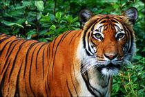 Tiger von URBAN ARTefakte
