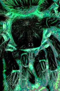 Lasiodora in Green von Rainar Nitzsche