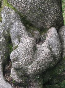 Baumleben von Susanne Winkels