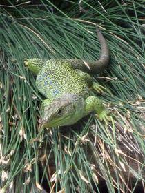 Grüne Echse von Susanne Winkels