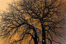 Trees by Leopold Brix