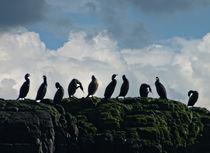 Ten Little Coromorants Sitting On A Wall by Roger Butler