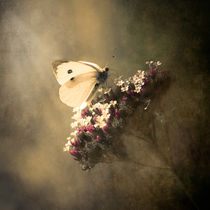 'Butterfly Spirit #01' by loriental-photography