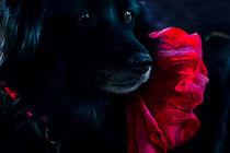Rouge et Noir von Larisa Kroshkin