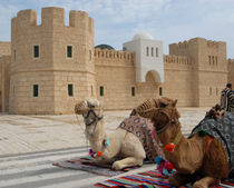 Camels, Tunis, Africa by Philip Shone