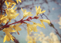 Spring Blessing by Sybille Sterk