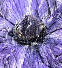 Anemone Purple Paints. by rosanna zavanaiu
