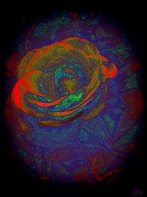 Eine Rose wird Geboren... von jefroh