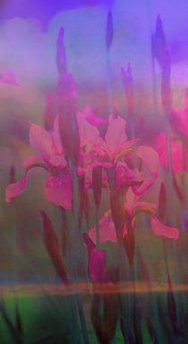 Img-verliebte-iris