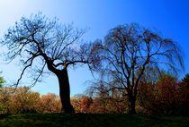 A TREE von Maks Erlikh