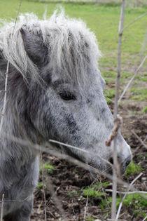 Pony-16