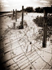Beach-fence-img-5048