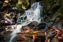 Waterfall In Rain Forest von perfectlazybones