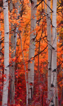 Aspens-painted-2